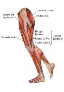 Cariocar anatomie jambe Ilio-tibiale